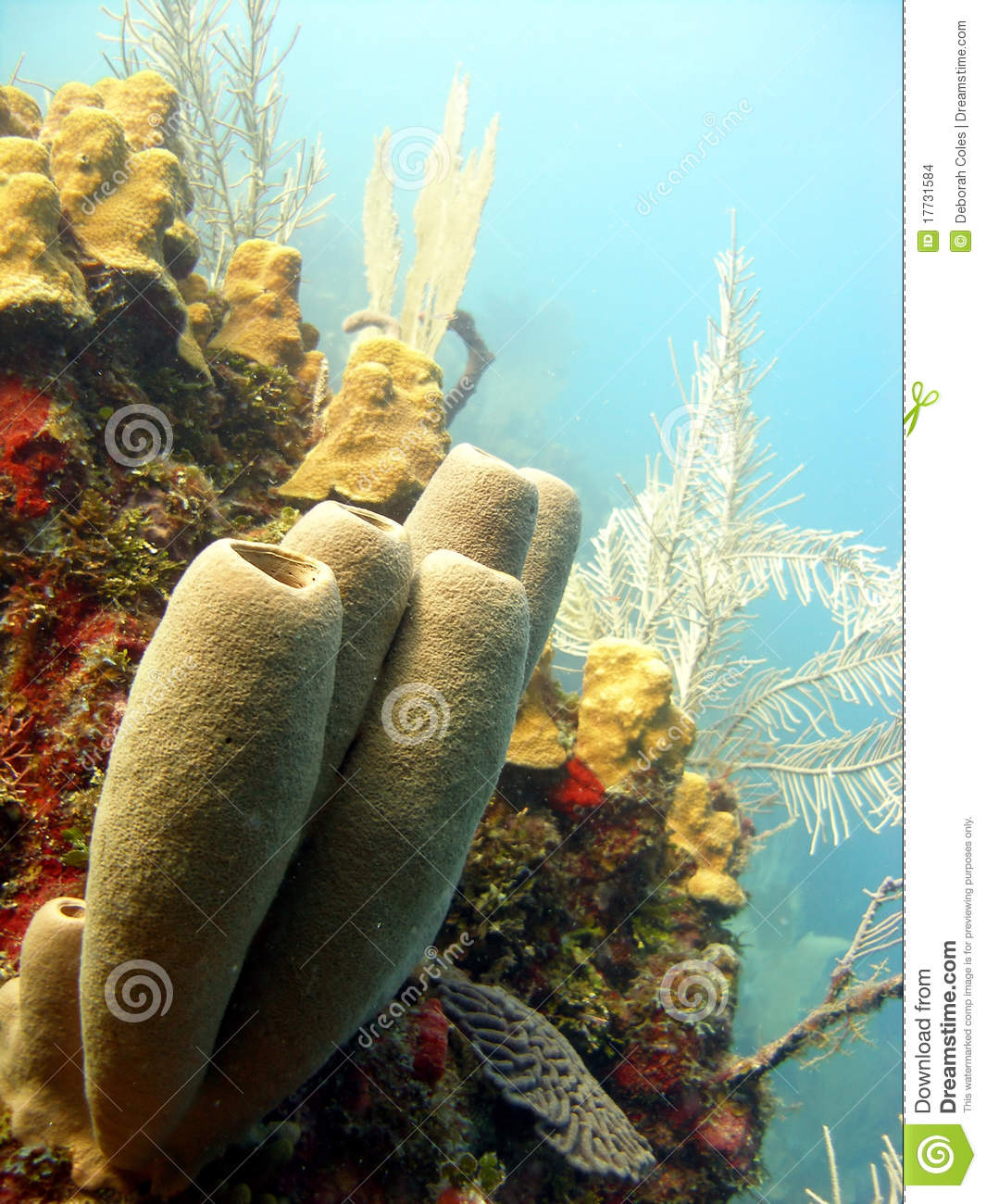 Colorful Wall Stickers Colourful Coral Reef Scene Stock Images Image 17731584