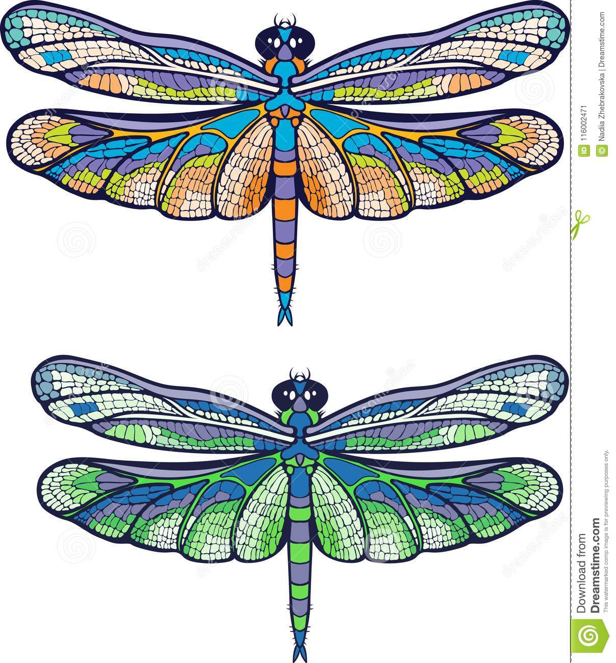 Colourful dragonfly.