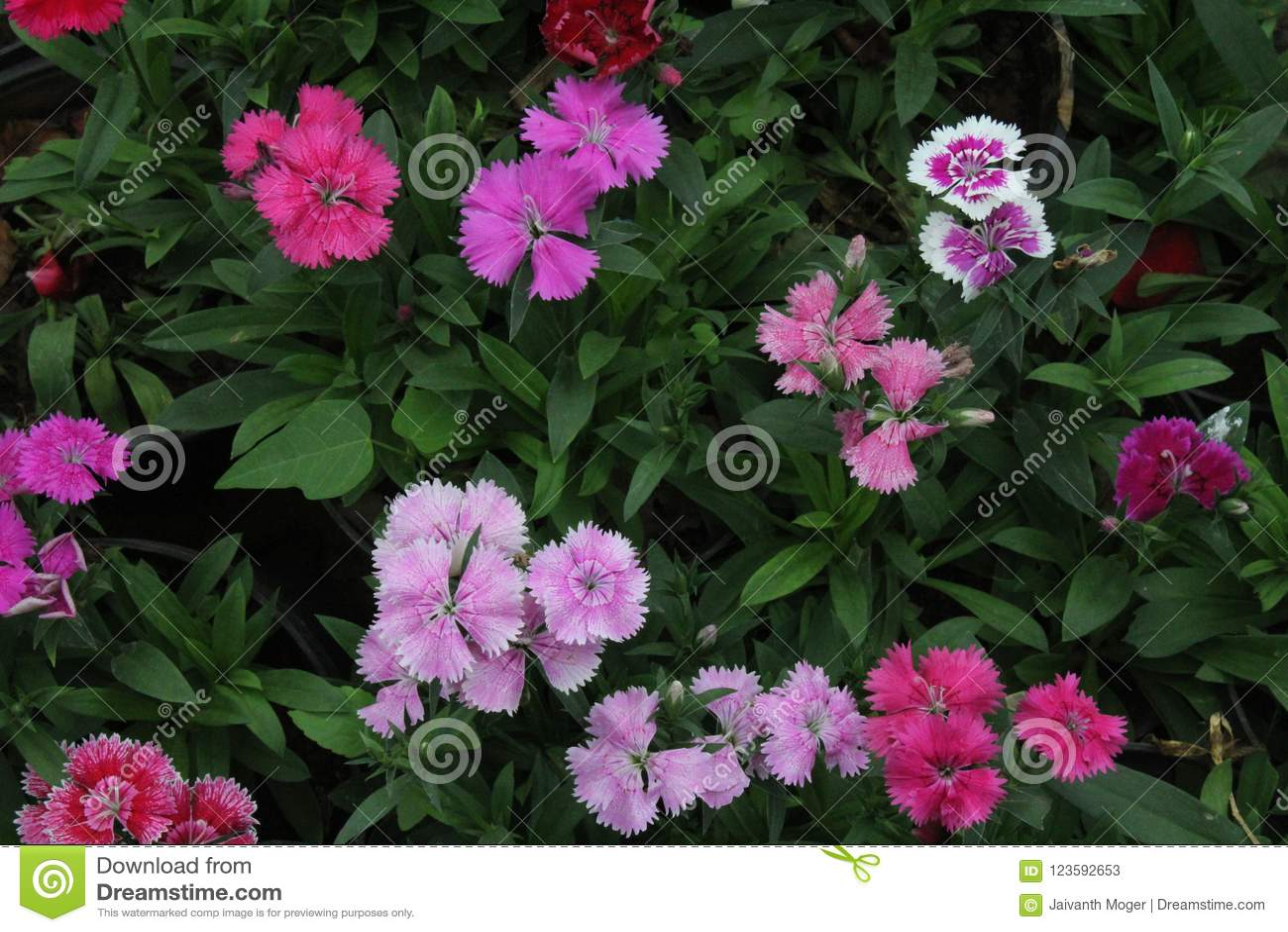Colourful Flowers Desktop Mobile Wallpaper Background Stock Image