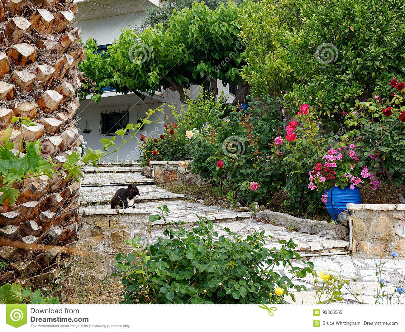 Download Colourful Front Garden Path Stock Image   Image Of Black,  Entrance: 93366565