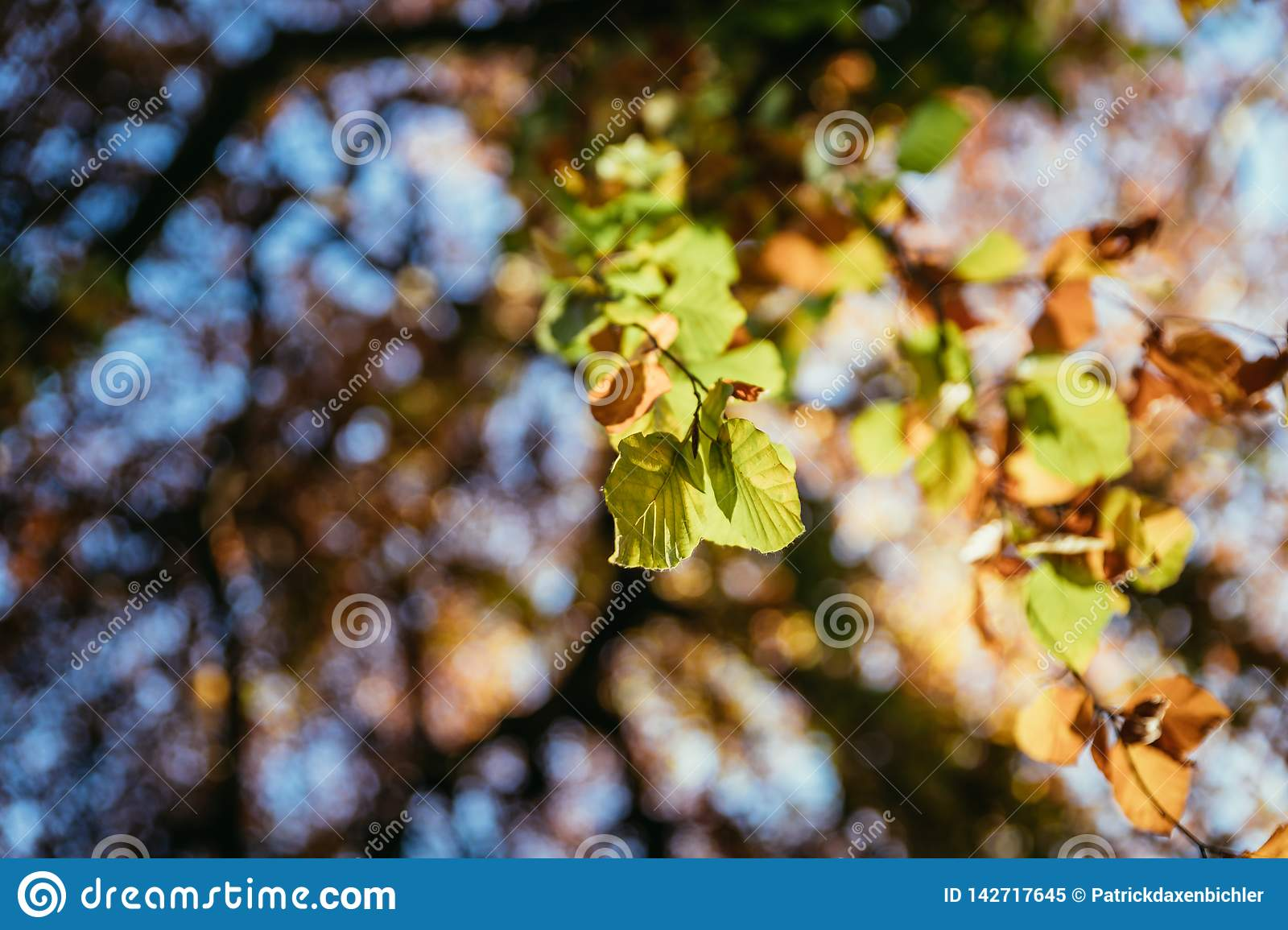 Colourful leaves in a park, autumn, copy space