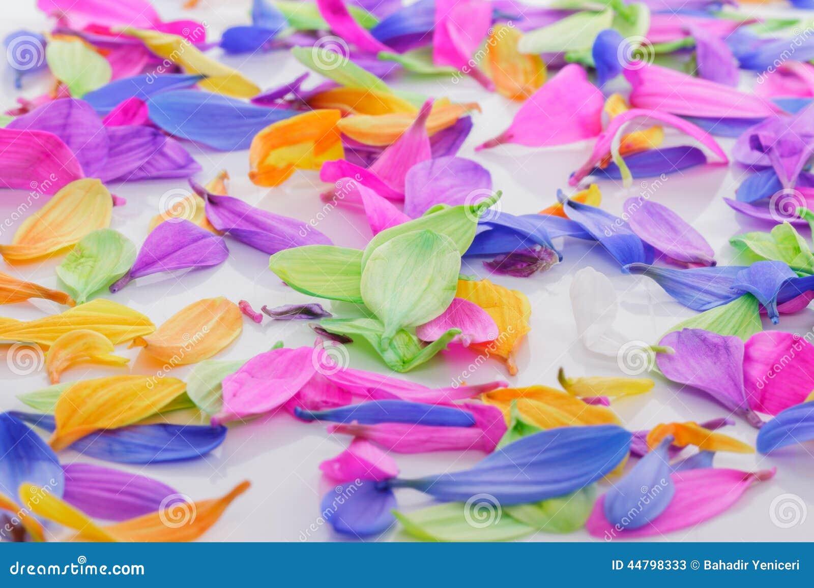 Colourful Petals