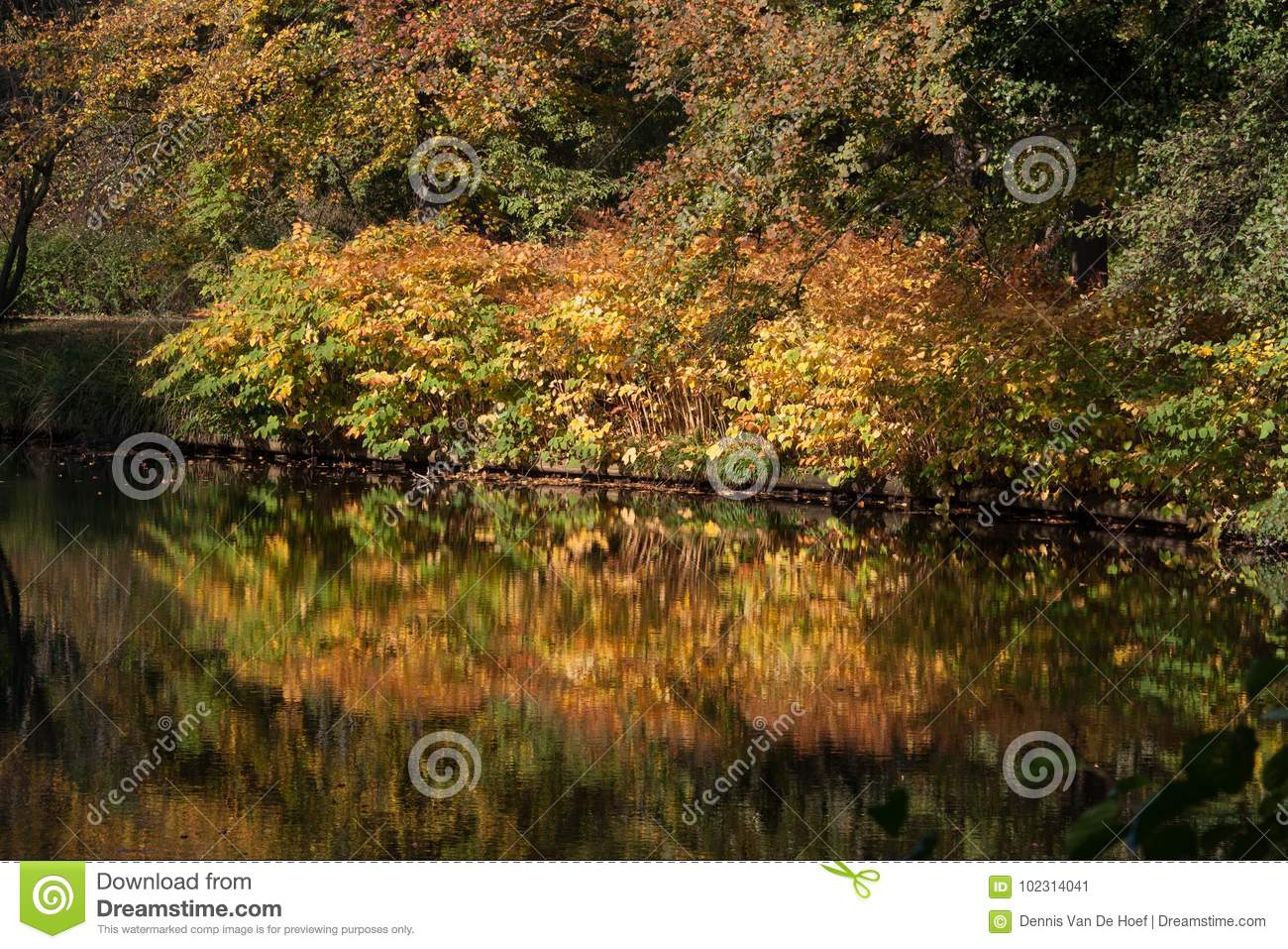 Colourful autumn trees reflecting in water.