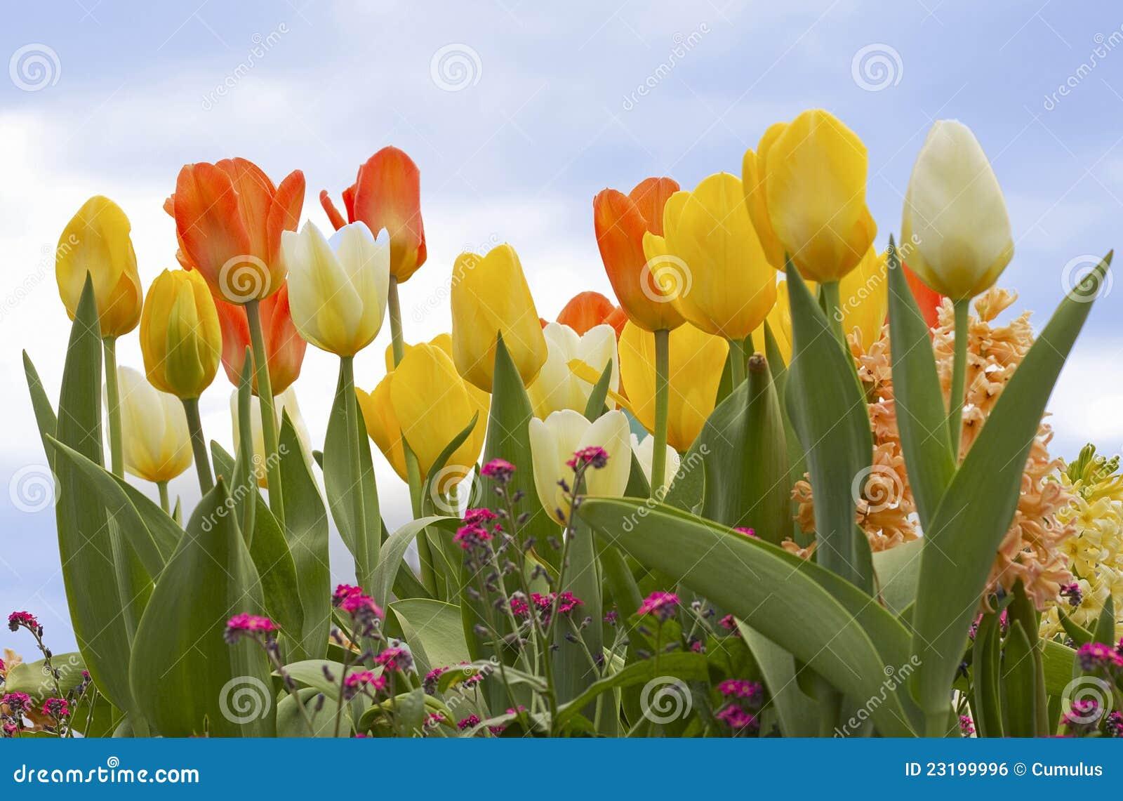 Colourful Spring Flowers Stock Photo Image Of Botany 23199996