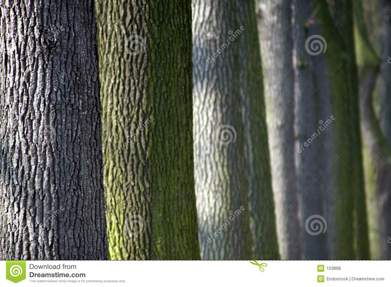 Colourful trunks of trees