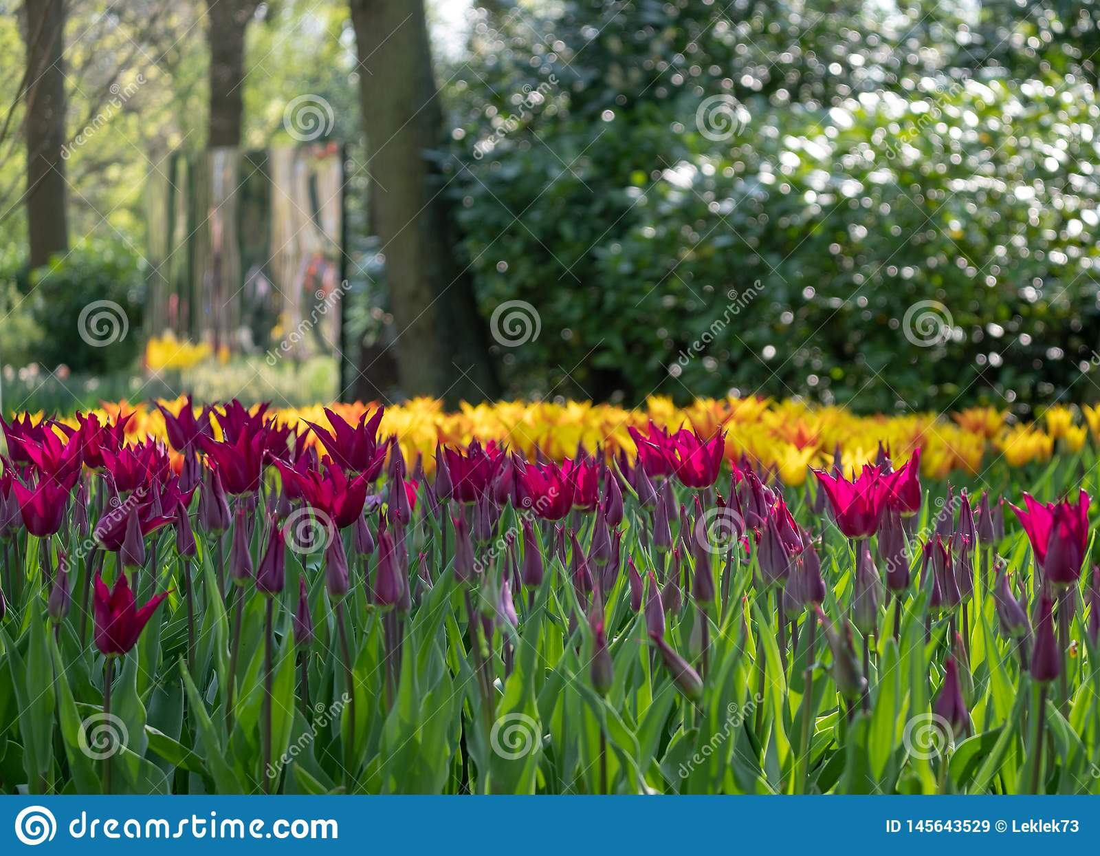 Colourful Tulips Laid Out At Keukenhof Gardens Lisse South