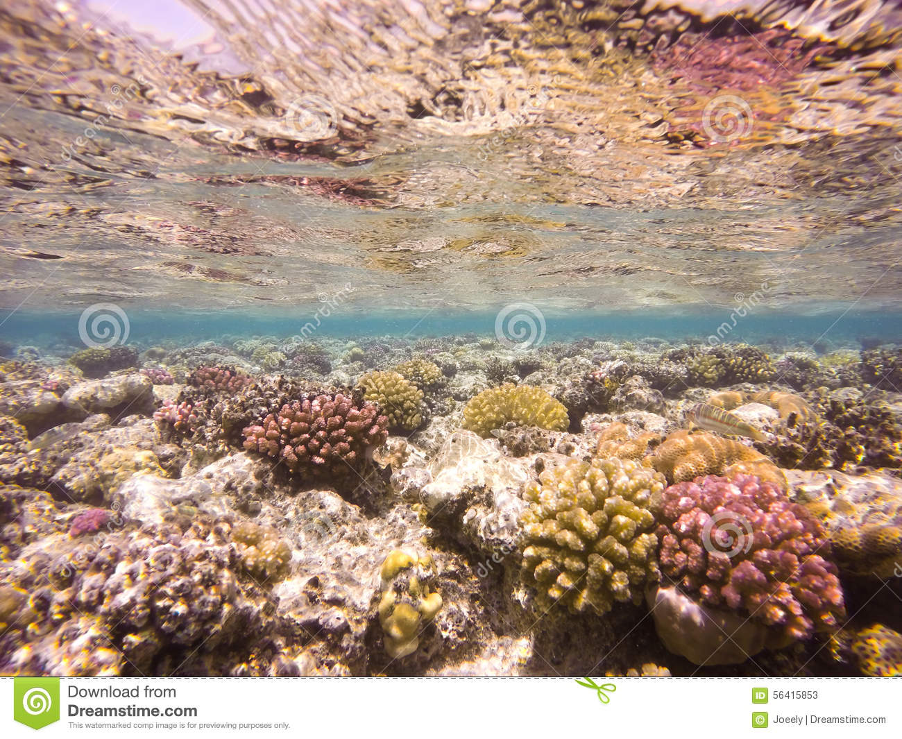 Vibrant Caribbean: Colourful Underwater Coral Reef Stock Photo