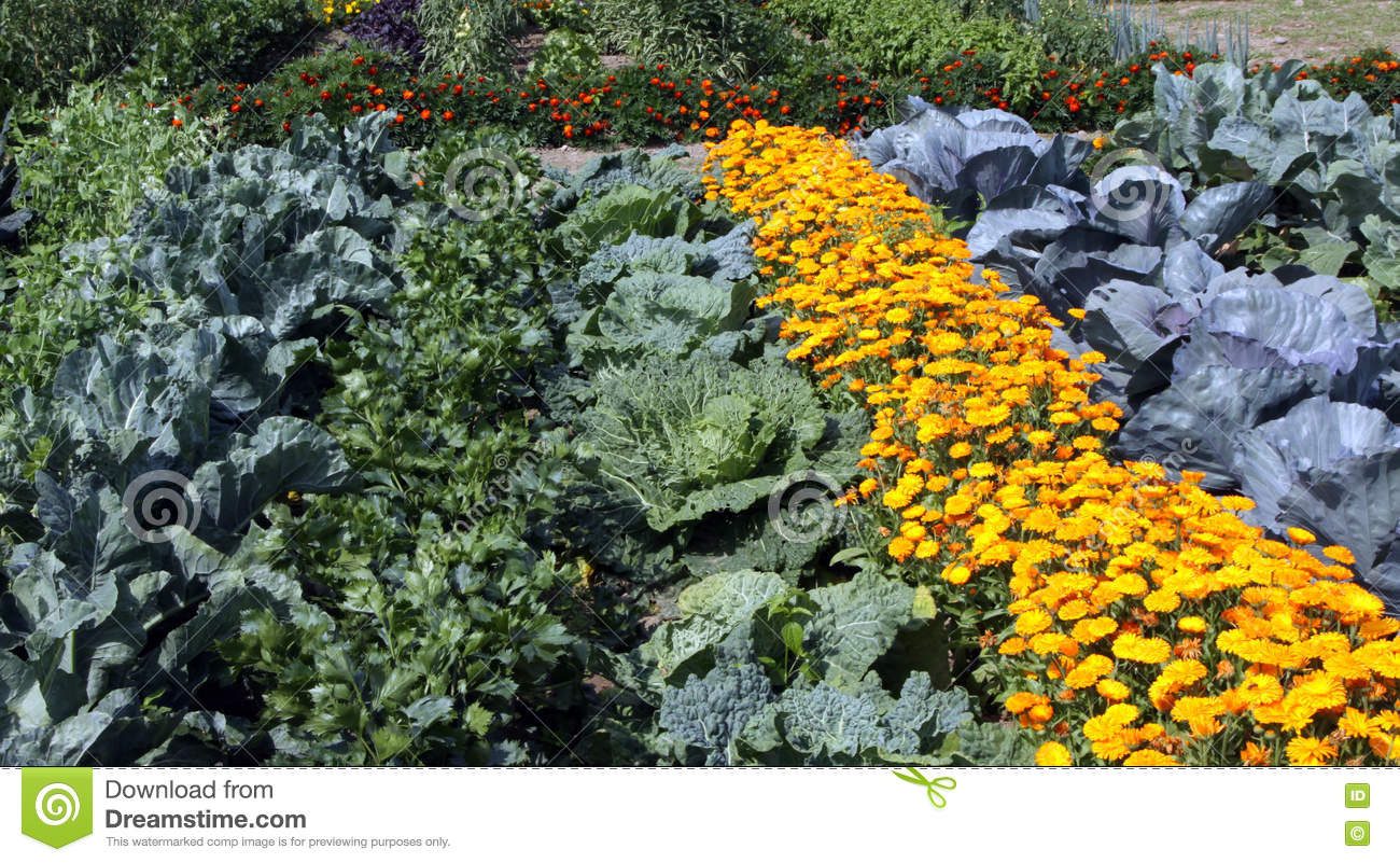 Colourful Vegetable Garden Bed Stock Image Image Of Space