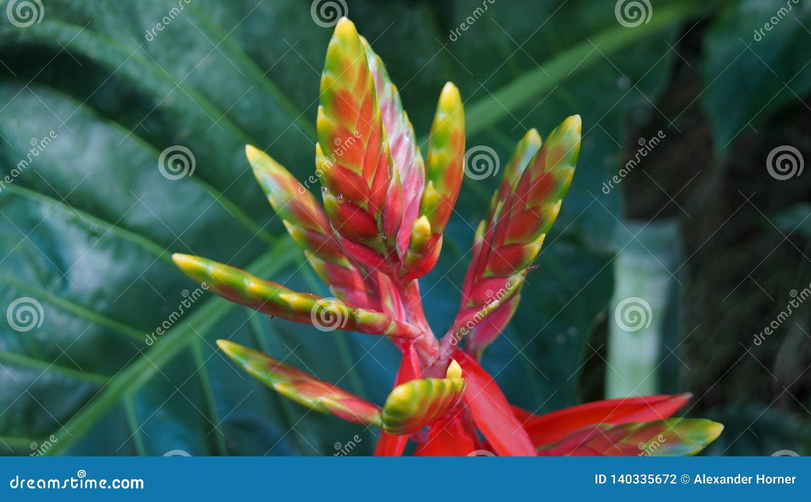Colourfull blossom in botanical garden
