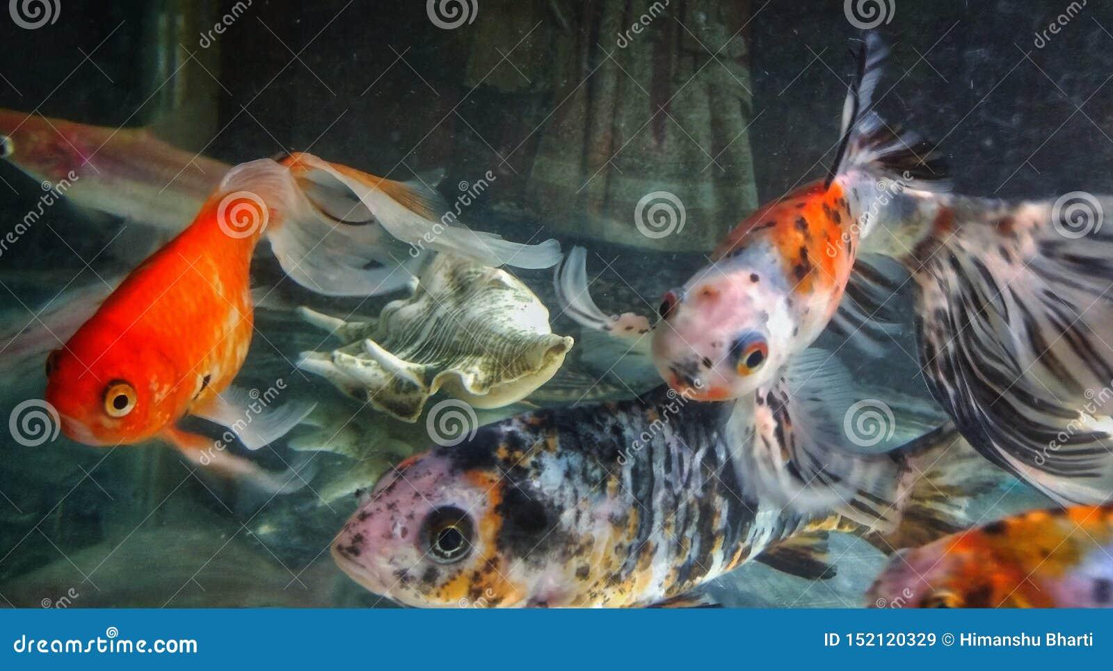 Colpo alto vicino dei pesci in un acquario