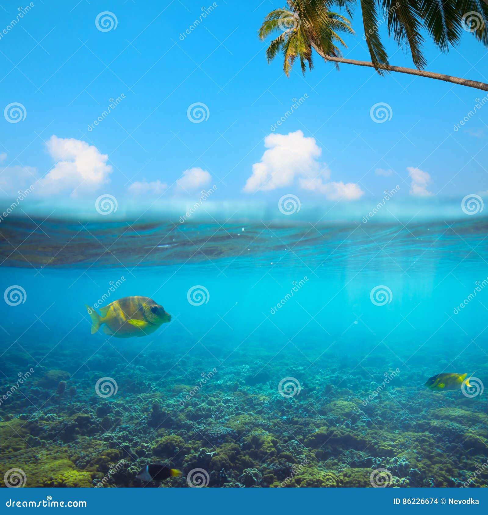 Colpo subacqueo tropicale