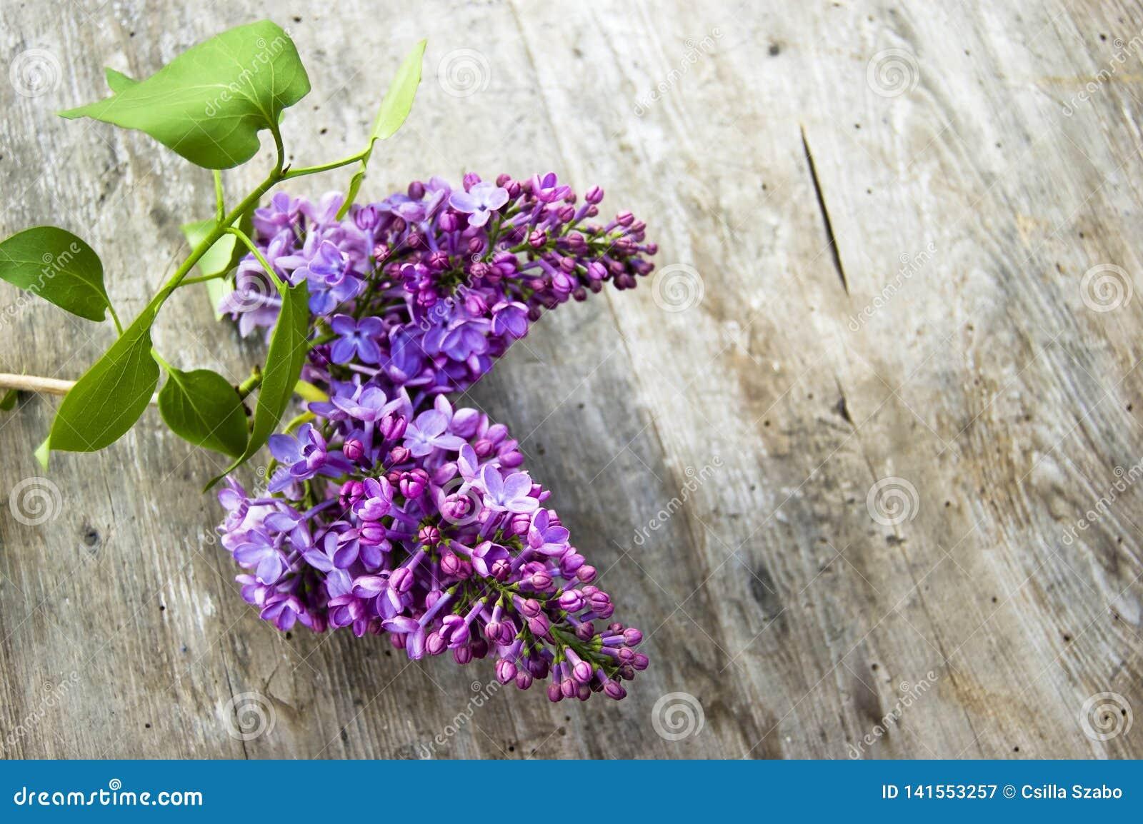 Colpo superiore, fine su del fiore lilla porpora fresco con le foglie verdi, siringa sul fondo di legno e rustico della tavola, f
