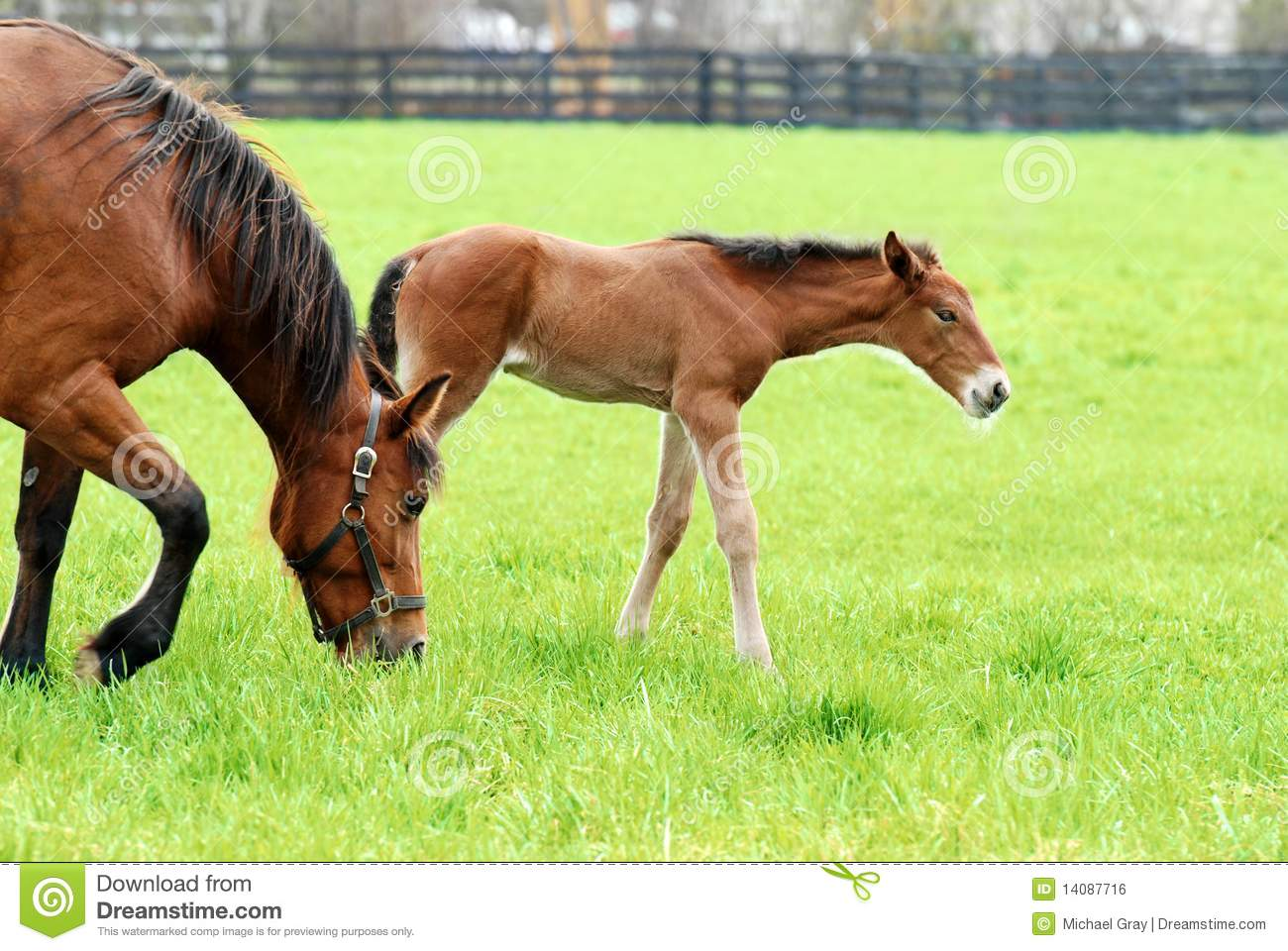 Colt and mare grazing