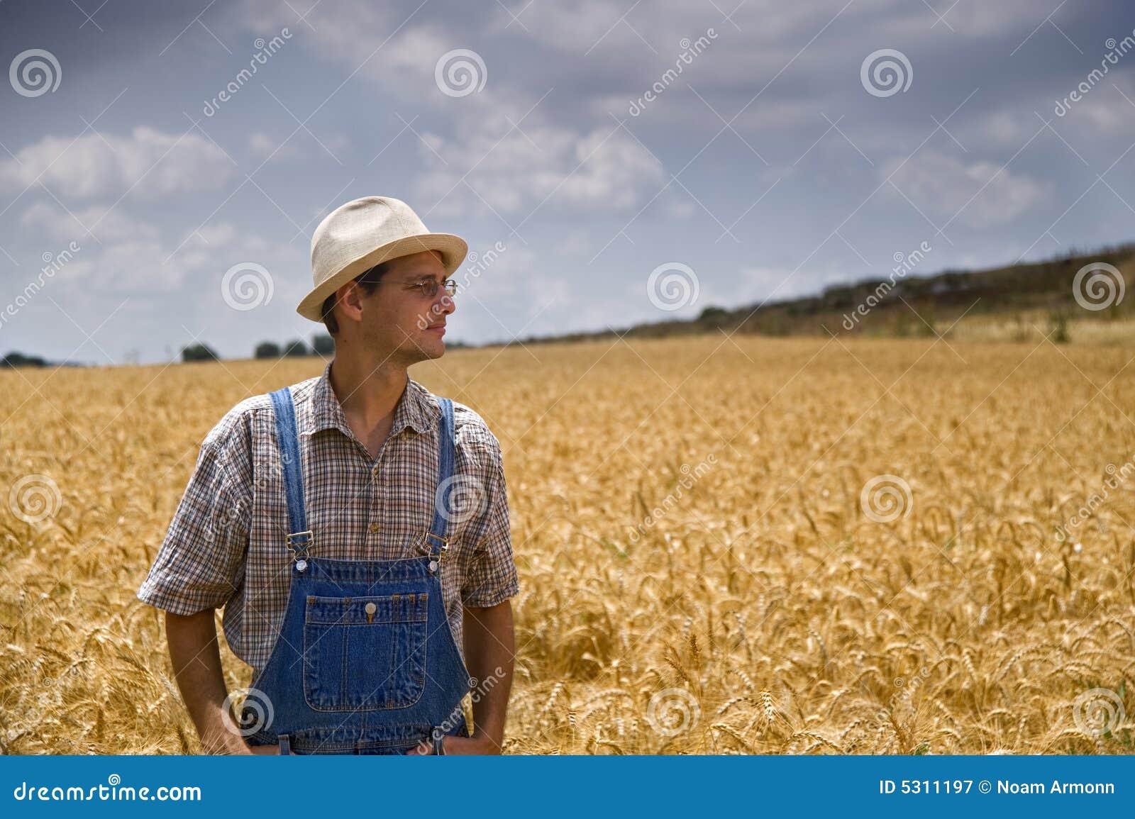 Download Coltivatore In Un Campo Di Frumento Immagine Stock - Immagine di nubi, coltivato: 5311197