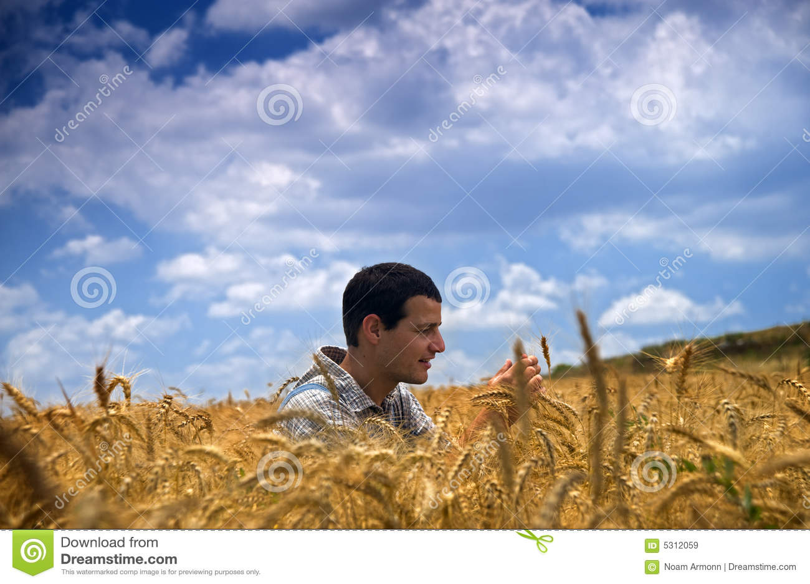 Download Coltivatore In Un Campo Di Frumento Immagine Stock - Immagine di crop, raccolta: 5312059