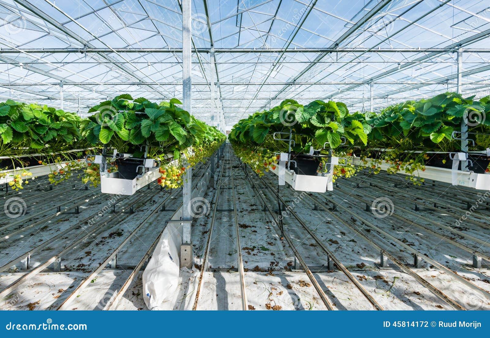 Coltivazione idroponica della fragola in una serra for Planimetrie della serra
