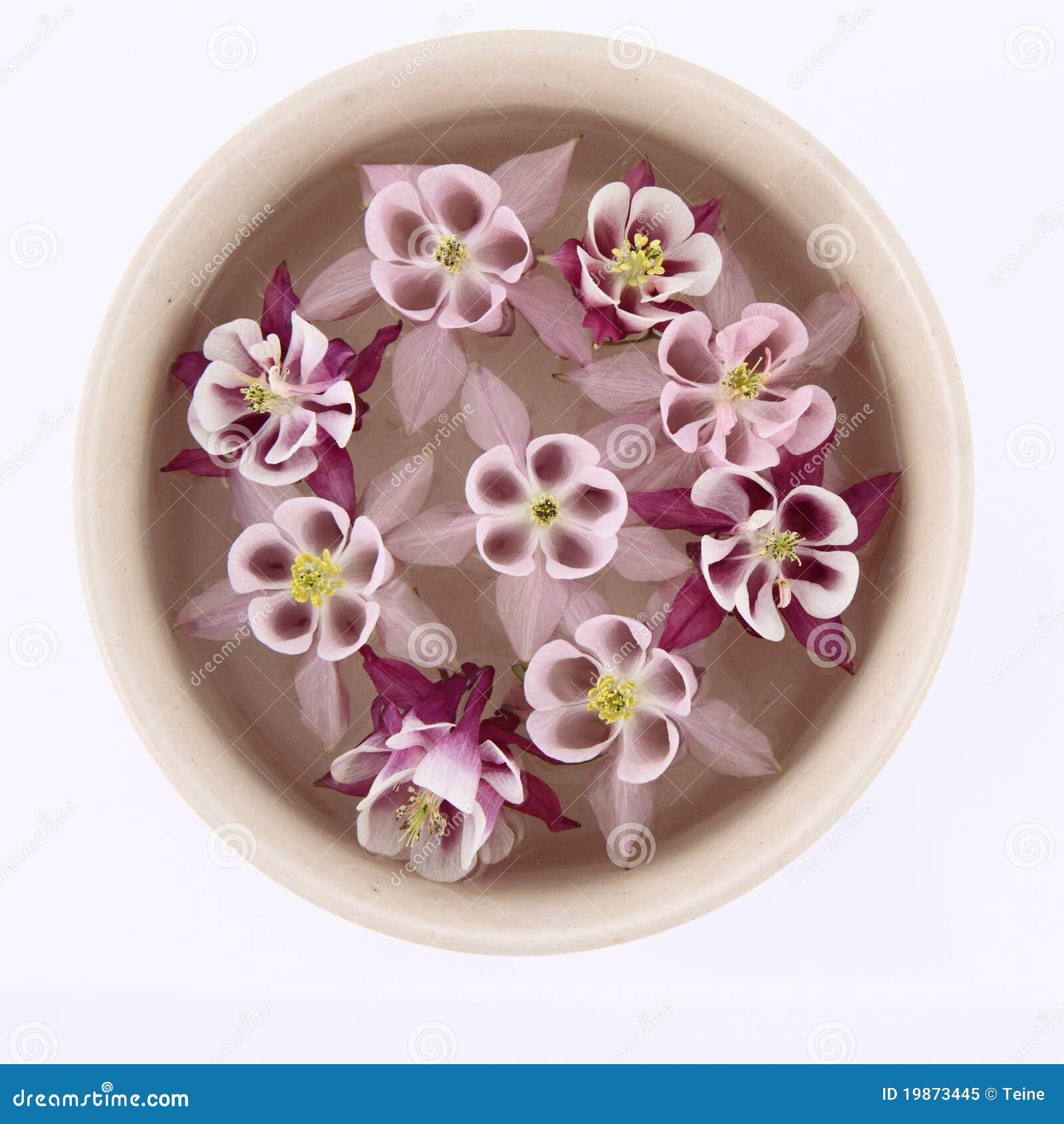 Columbine flowers floating