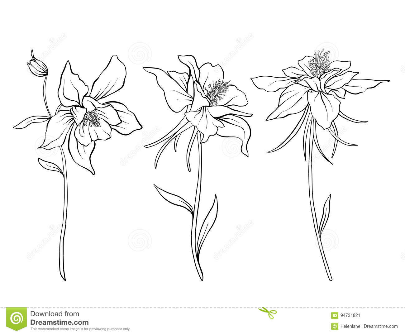 Columbine Flowers Set Of Outline FlowersrStock Line Vector Illustration Hand Drawing Coloring Page For Bookr