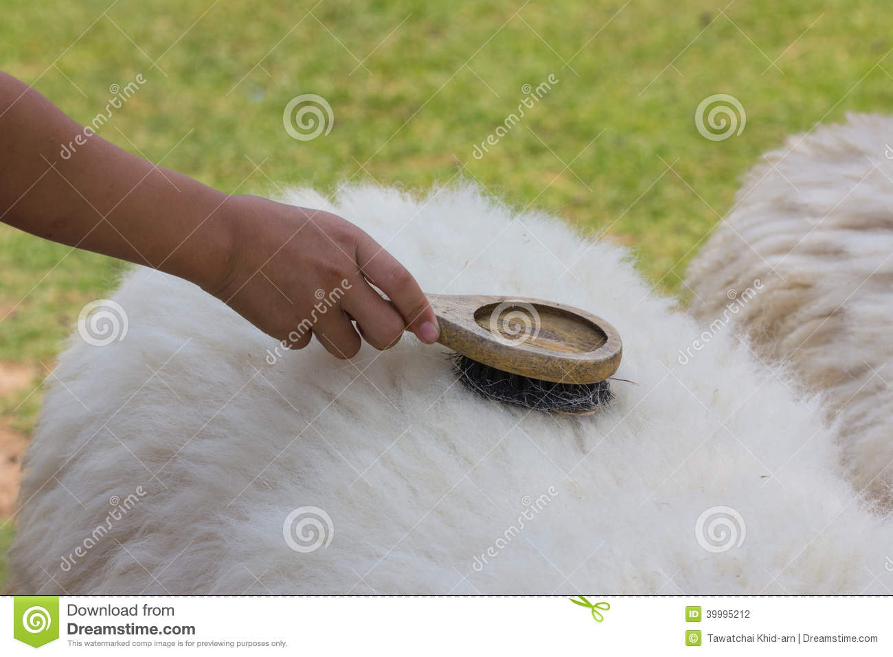 Comb Brush Sheep Wool Stock Photo Image Of Skin Nature