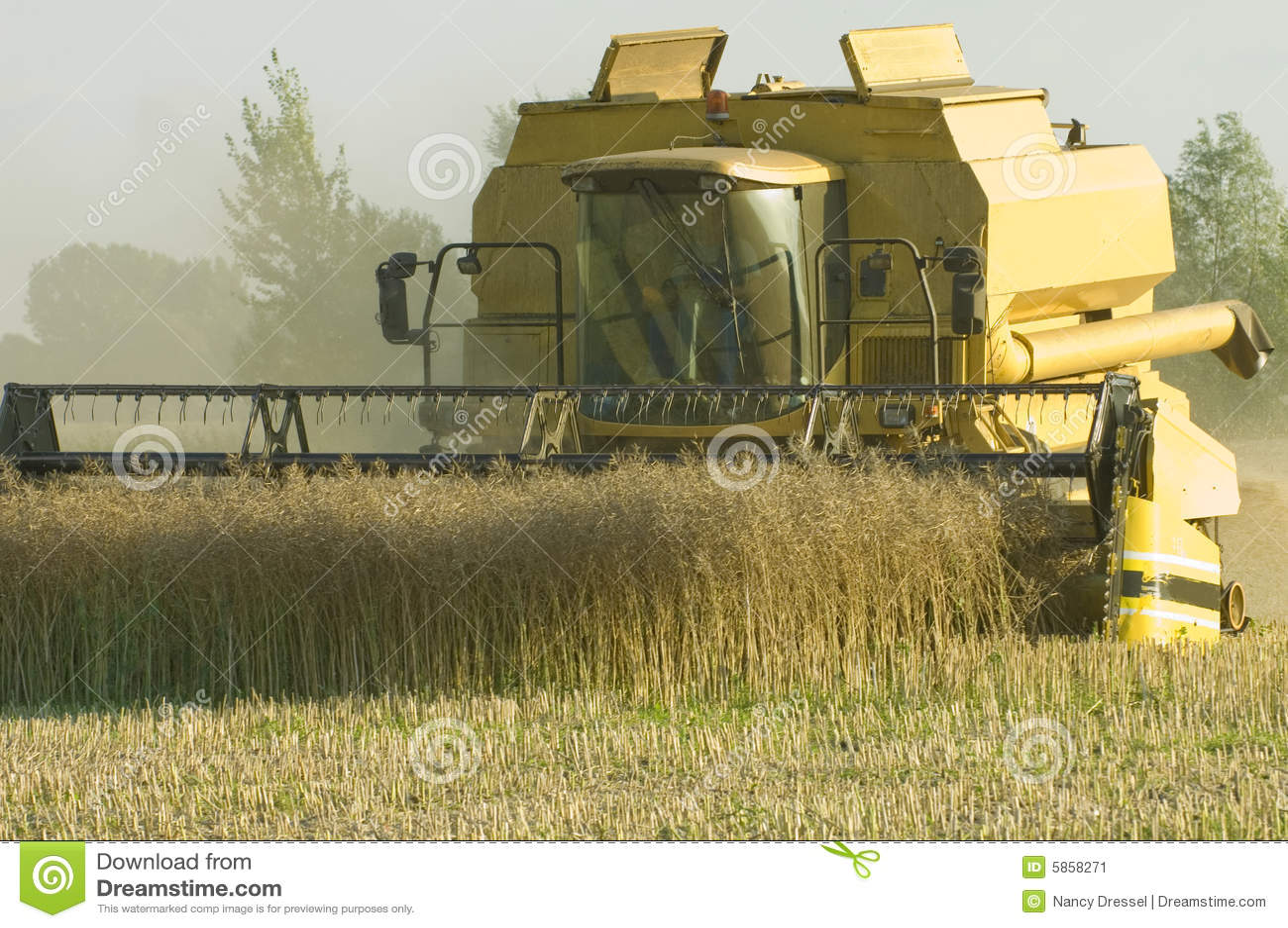 Combine corn earning harvester