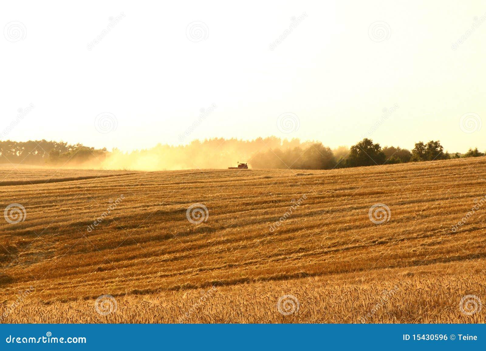 Combine on a field of rye