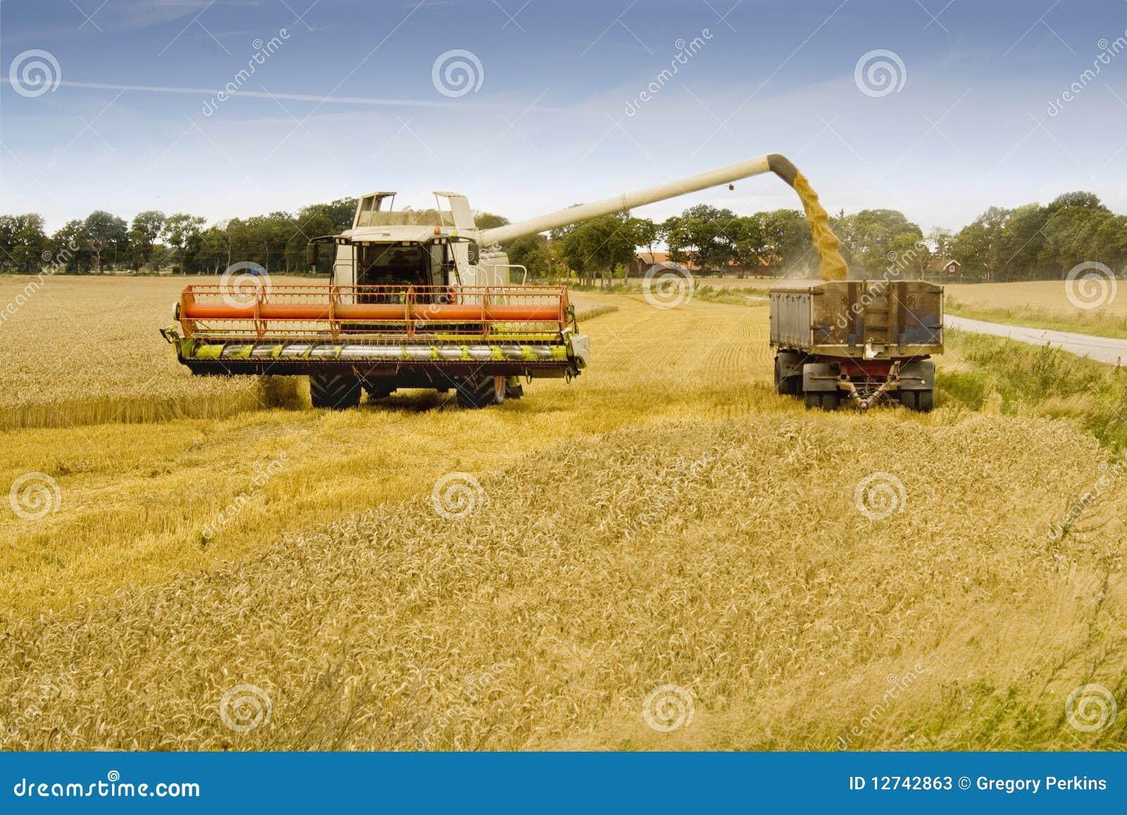combine harvester loading grain into a trailer stock image