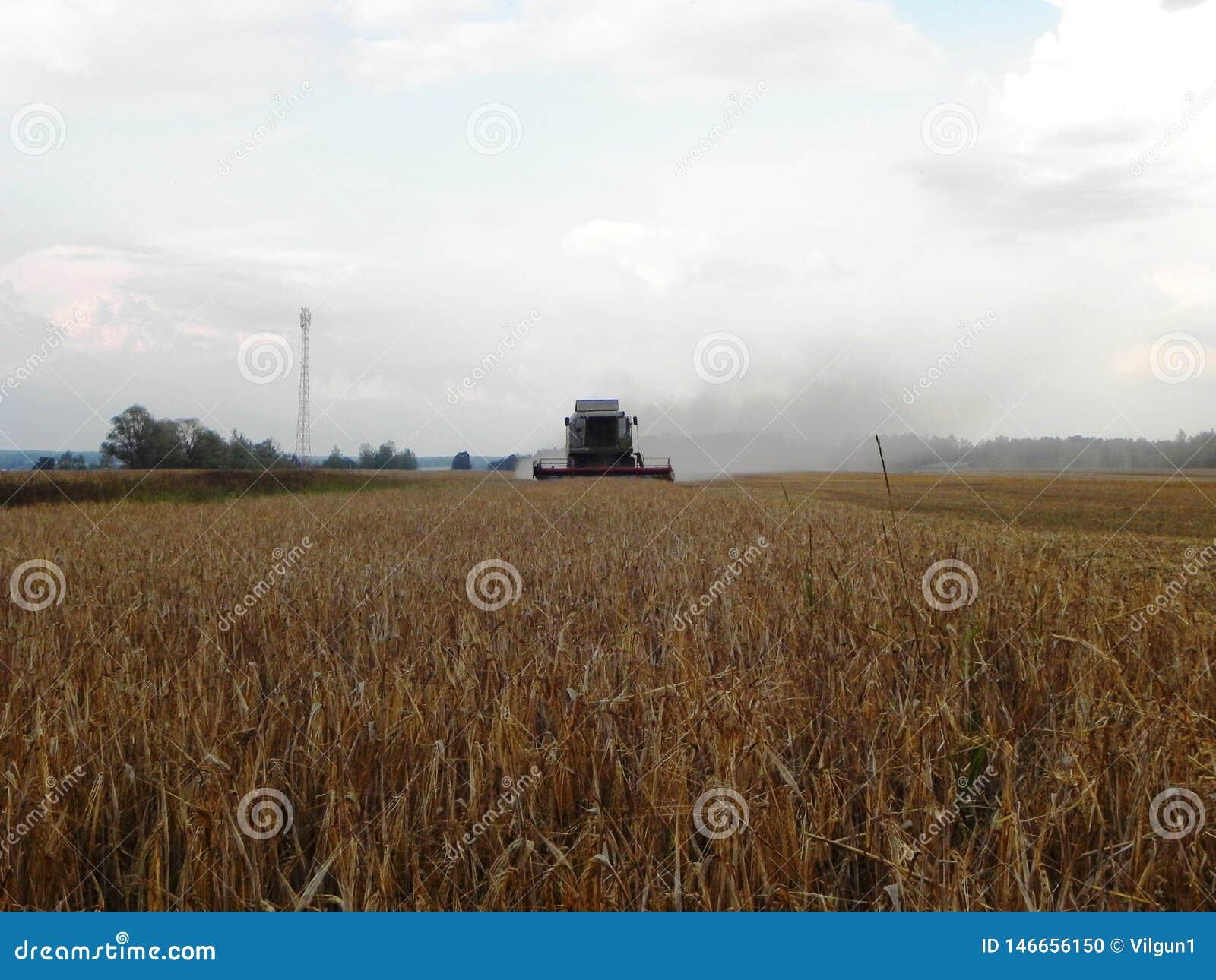 Combineer maait gras op de zomergebied Het oogsten na de zomer Details en close-up