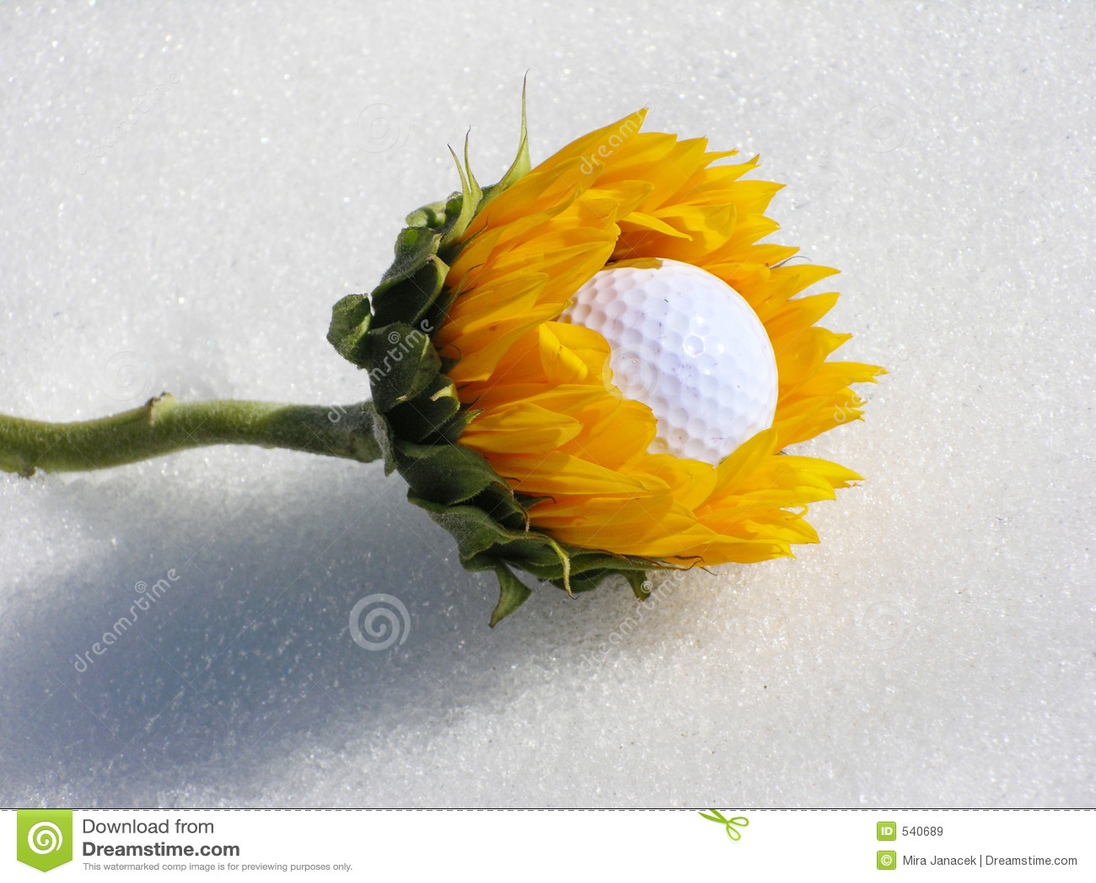 Comedor da esfera de golfe