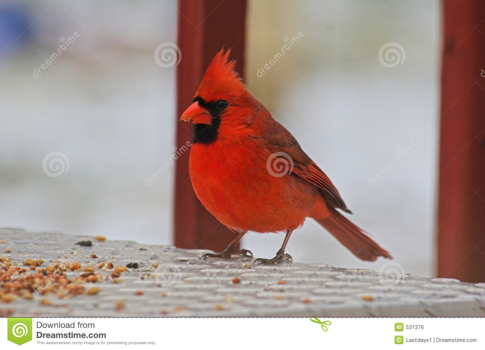 Comer cardinal