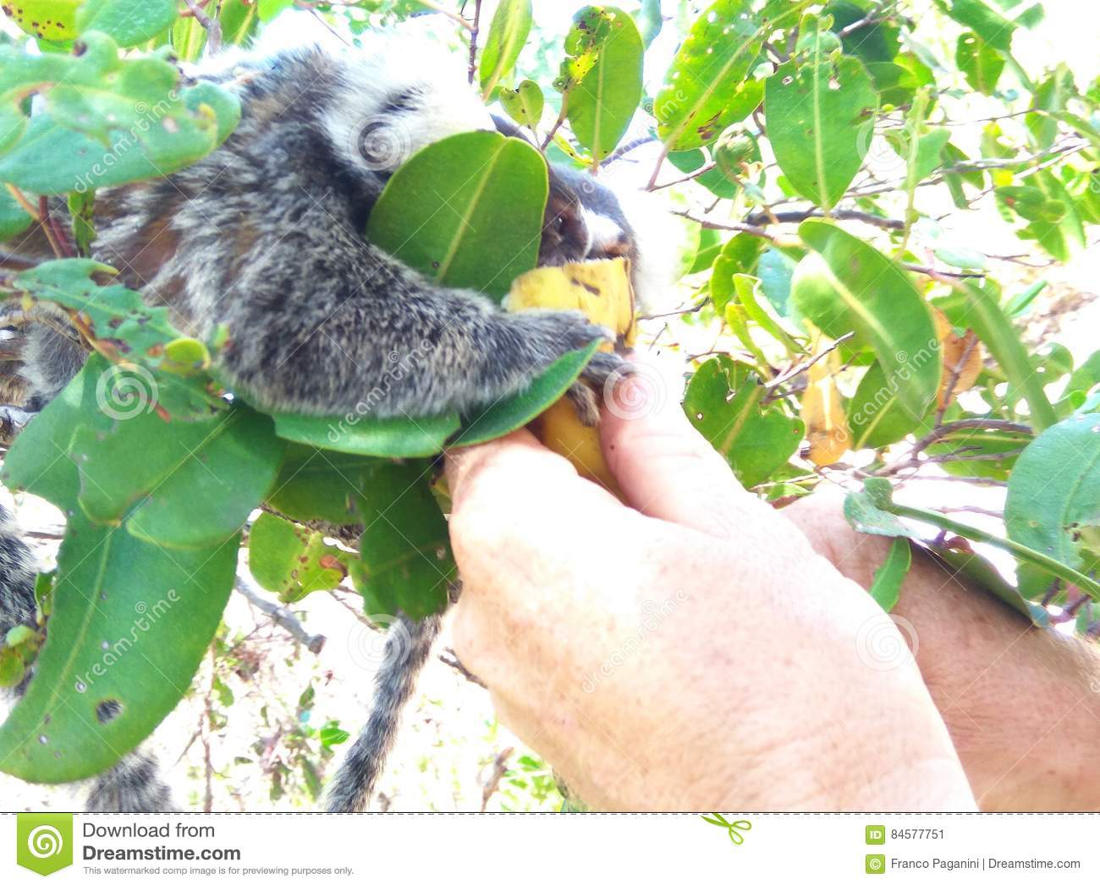 Comer do macaco