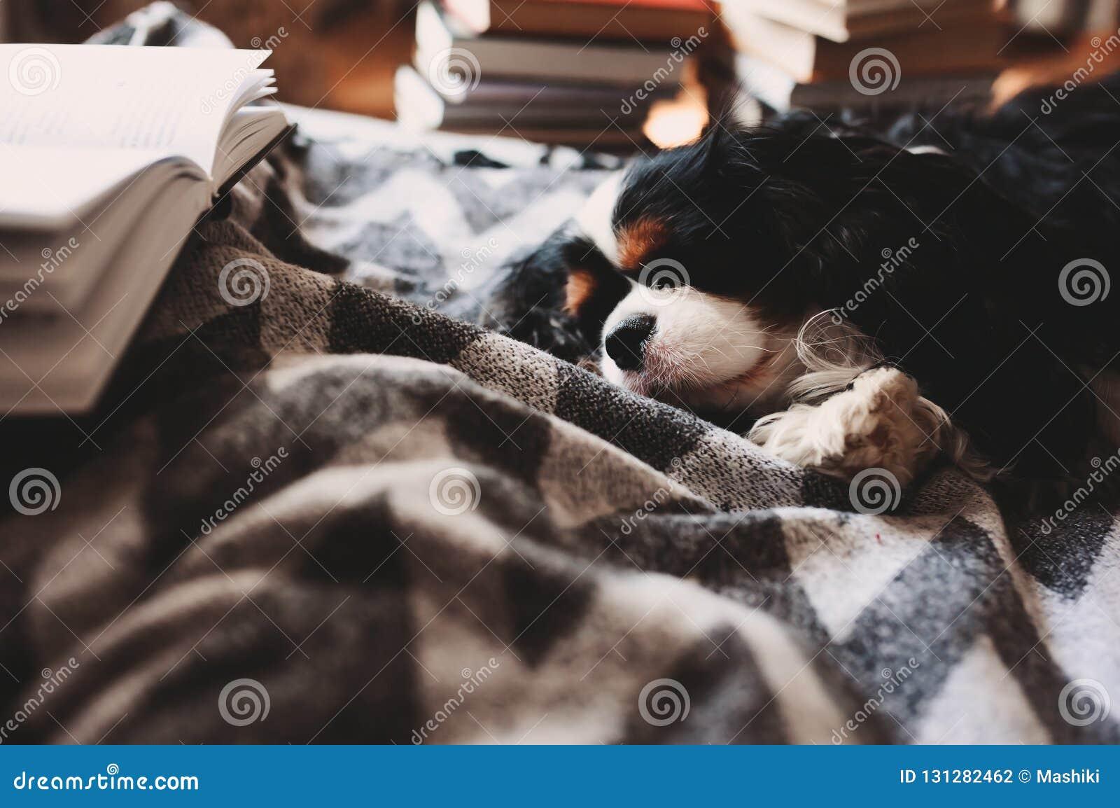 Comfortabel de winterhuis met hondslaap op bed op warme deken, boek en kop thee