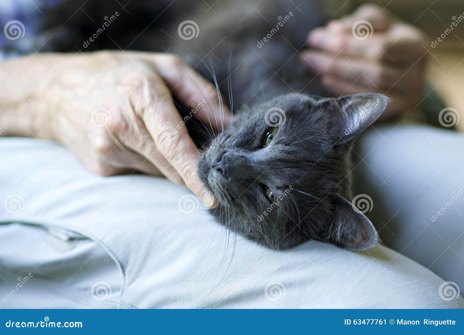 Comforting a Sick Cat