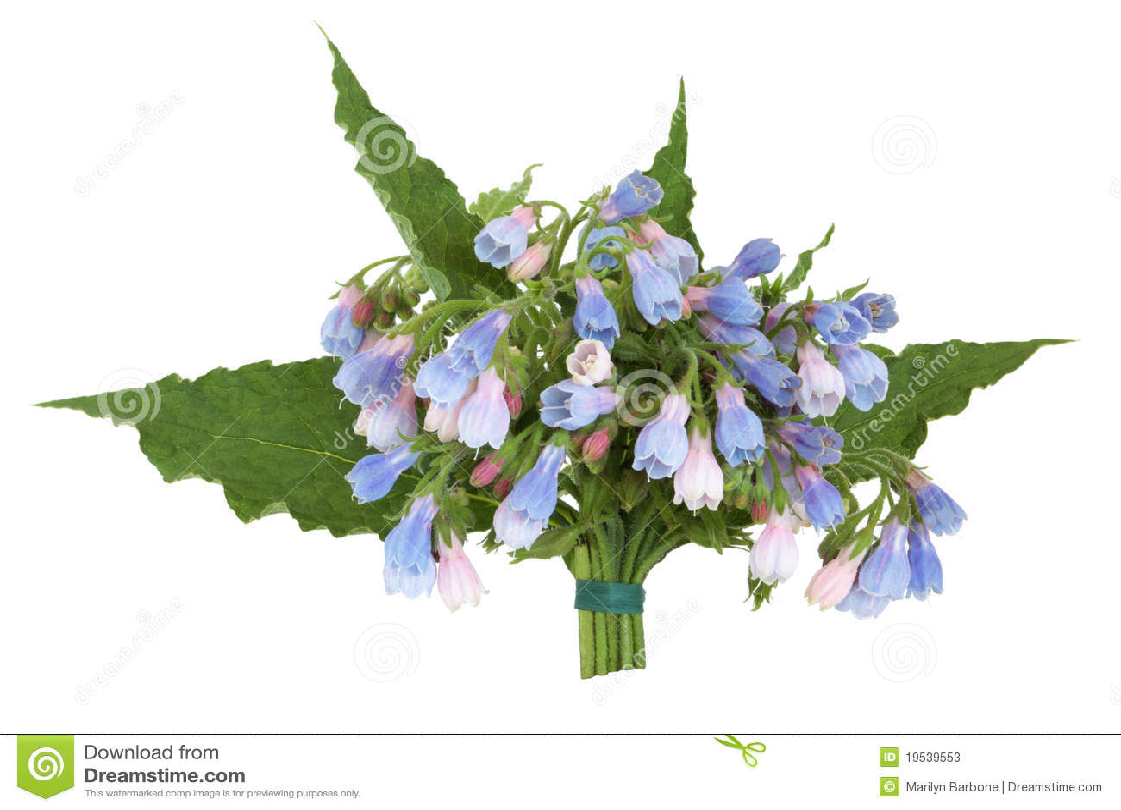 Comfrey μπουκέτο λουλουδιών &c