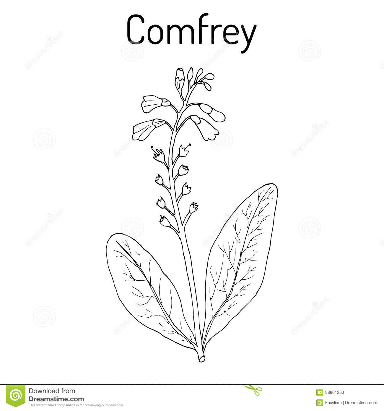 comfrey dating Comforting definition, affording comfort or solace see more.