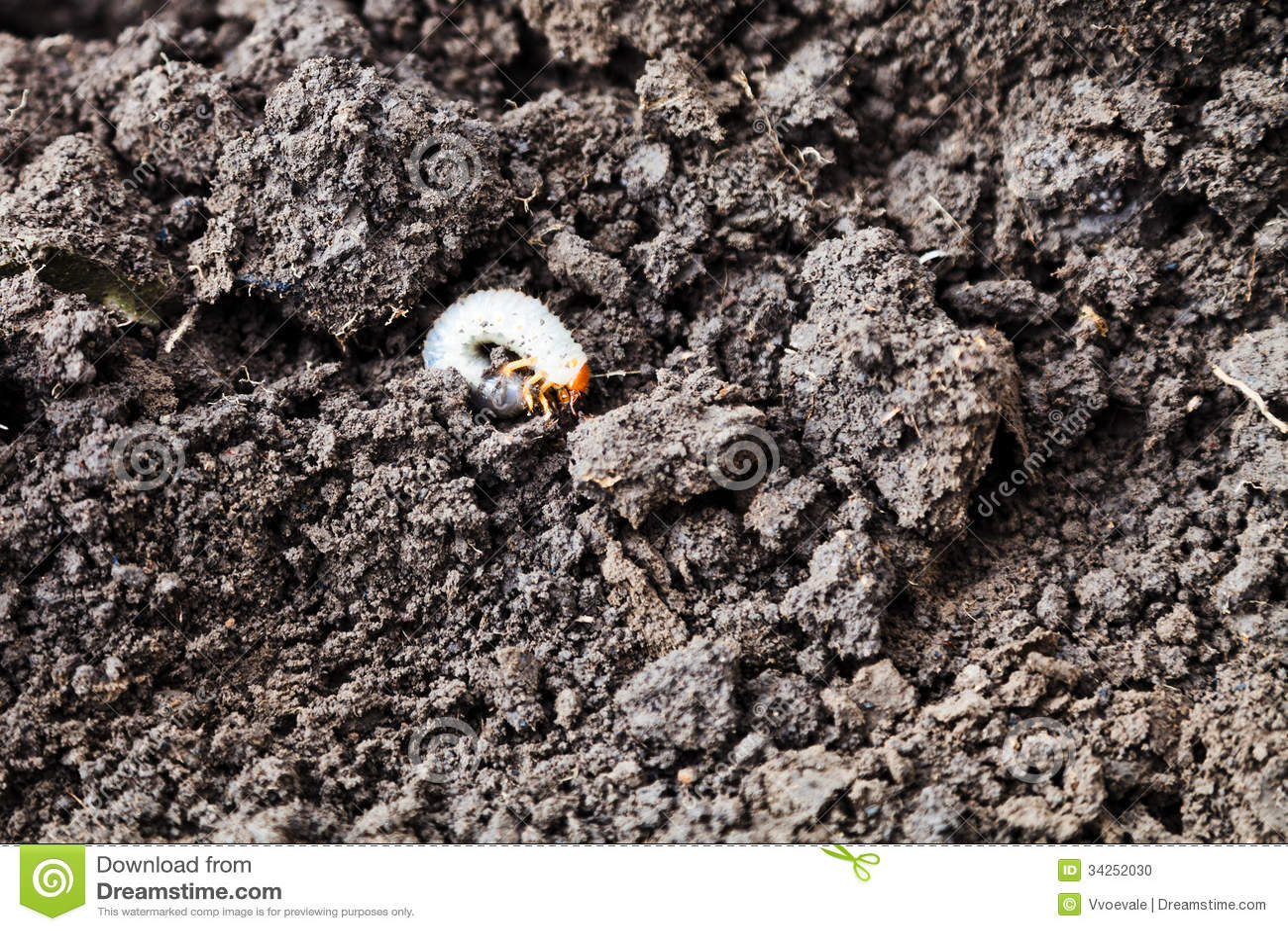 Comida blanca del abejorro