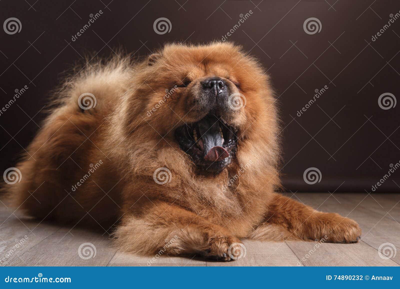 Comida da comida da raça do cão