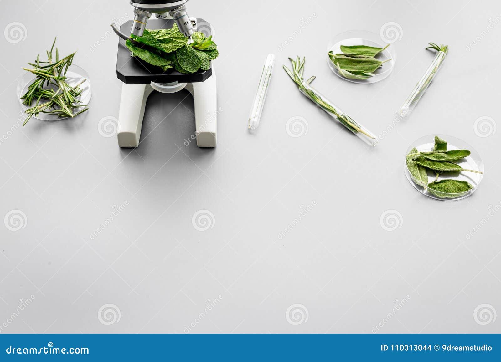 Comida de la seguridad Laboratorio para el análisis de alimentos Hierbas, verdes debajo del microscopio en espacio gris de la cop