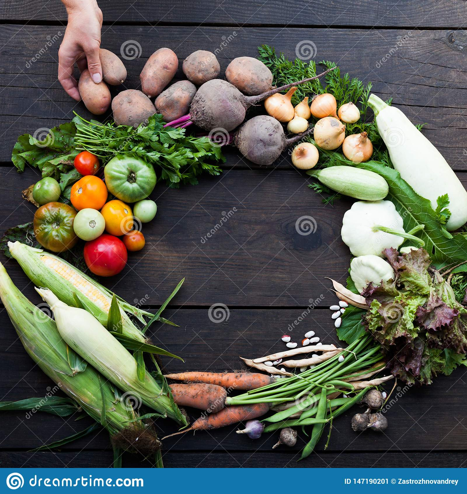 Comida vegetariana del jardín fresco del otoño, concepto orgánico de la granja