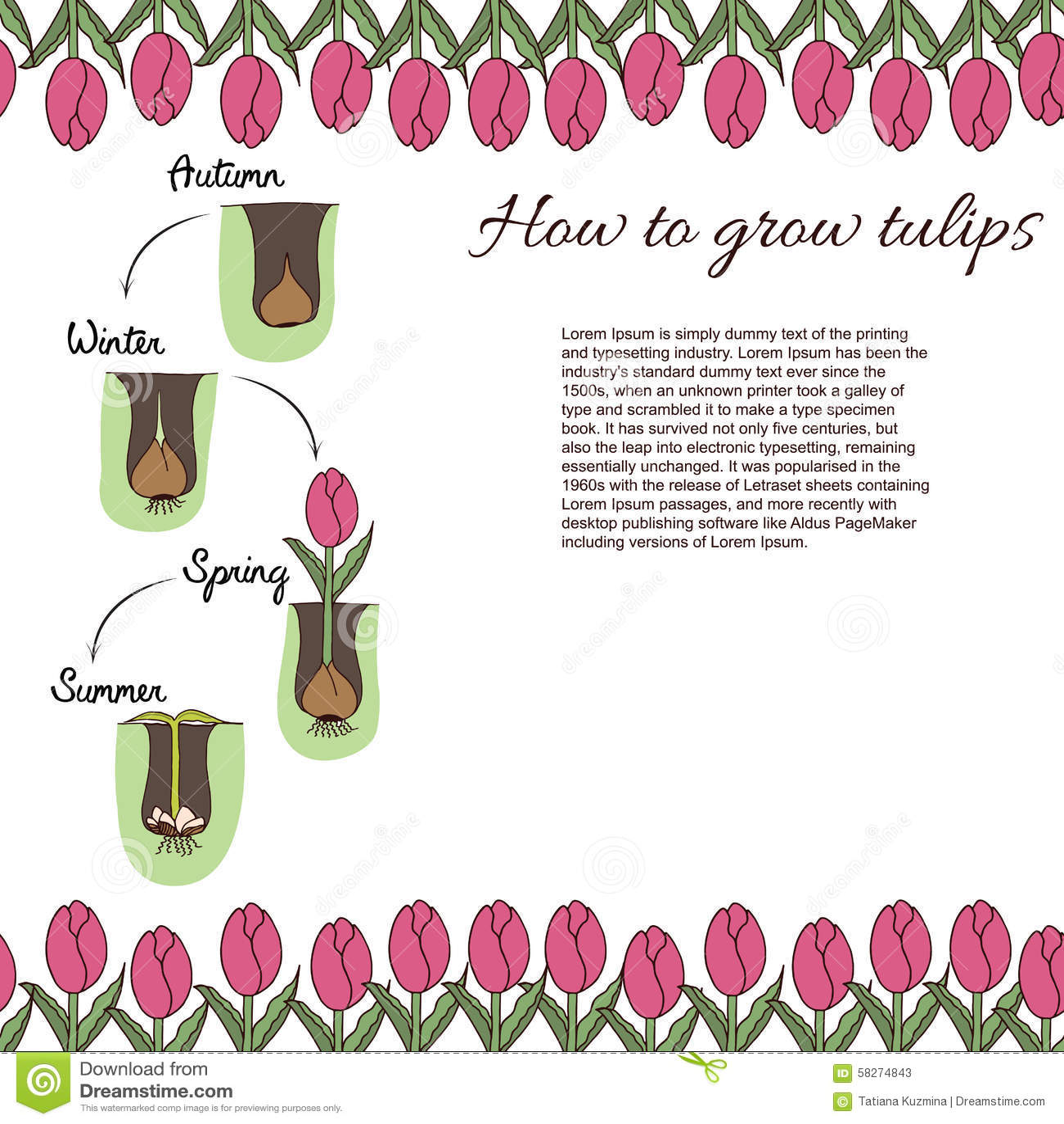 Comment Planter Des Tulipes Illustration de Vecteur ...