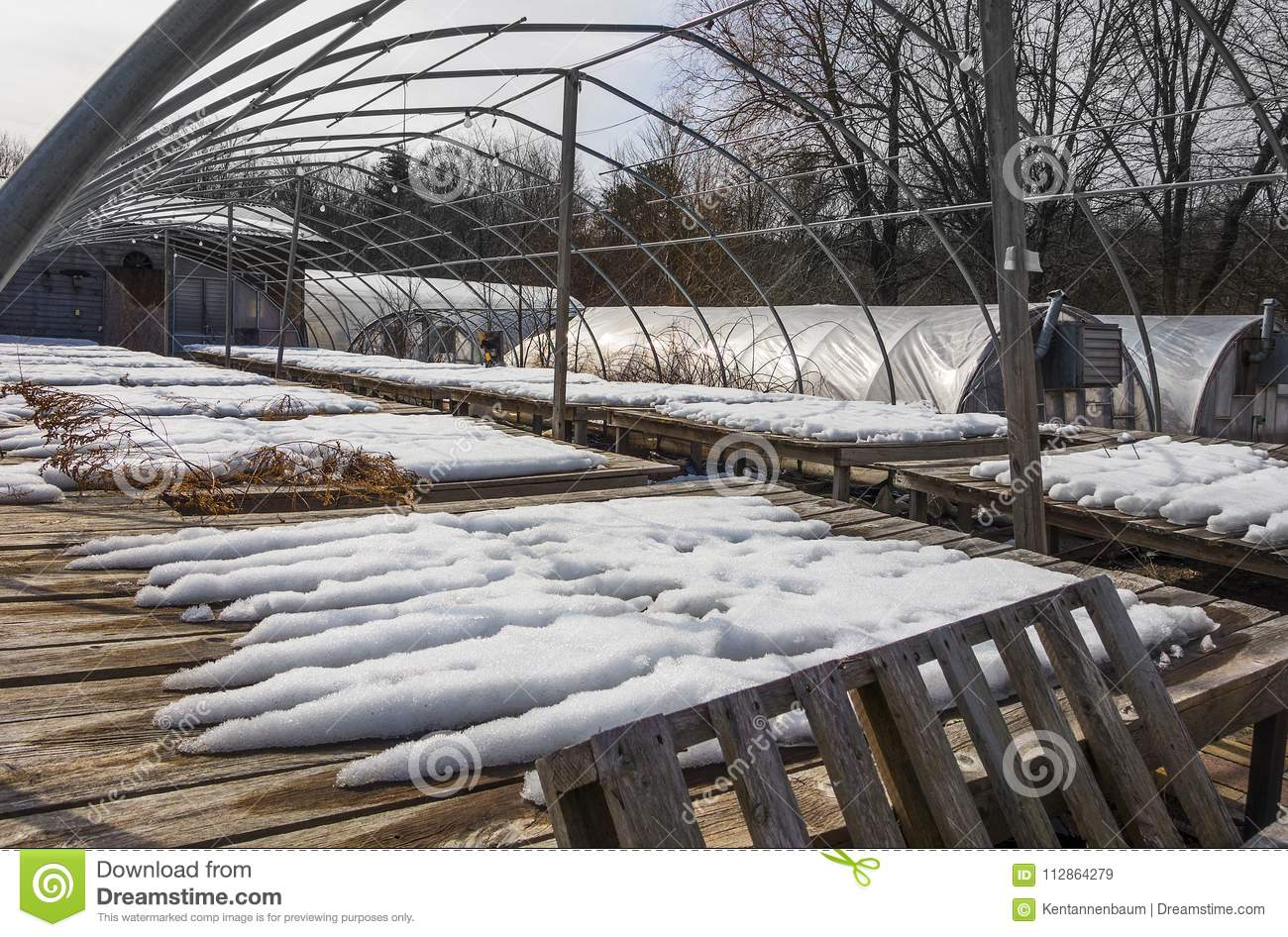 Sensational Commercial Greenhouse In Winter Stock Image Image Of Home Interior And Landscaping Mentranervesignezvosmurscom