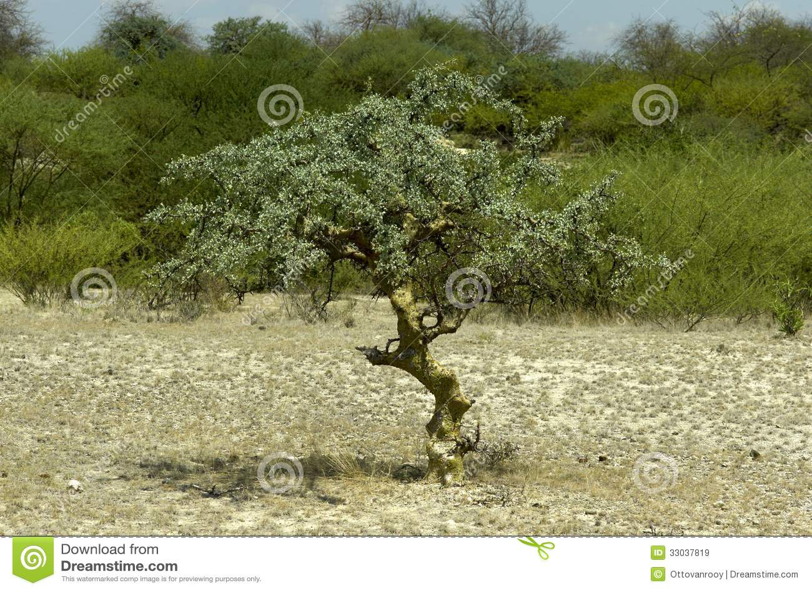 free familiy tree