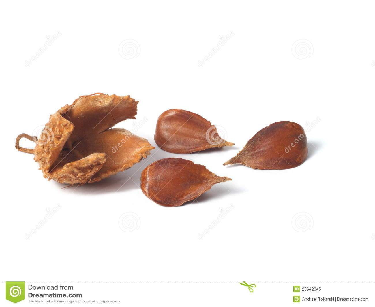 Common Beech Nuts Royalty Free Stock Photo - Image: 25642045