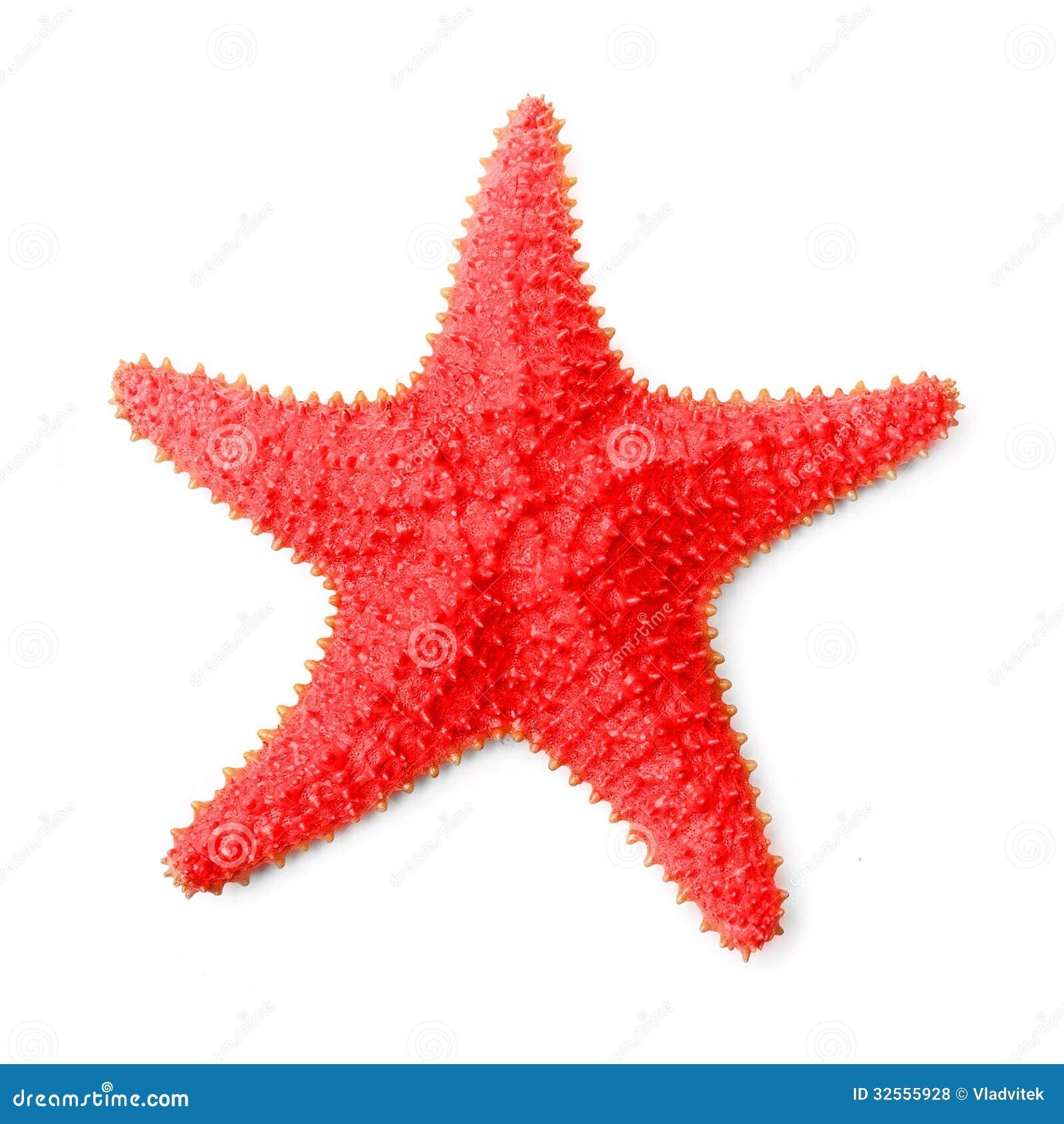 The Common Caribbean Starfish (Oreaster Reticulatus). Royalty Free ...