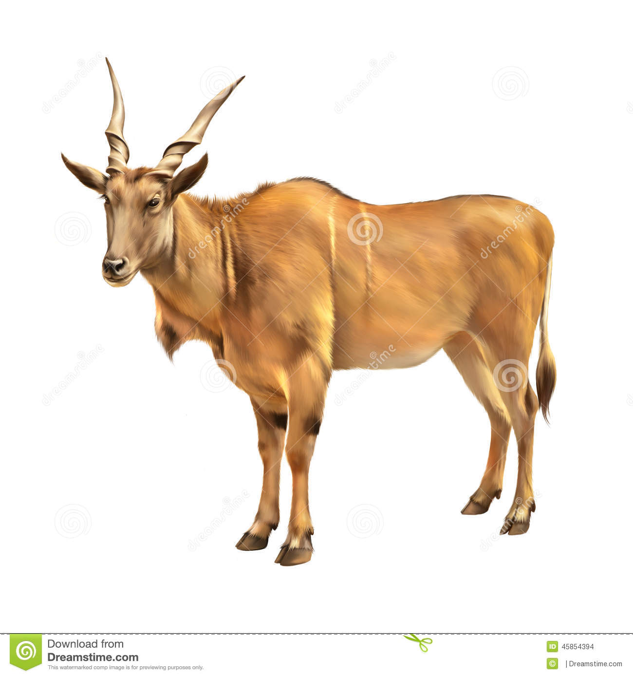 Common Eland, Taurotragus Oryx, Antelope In Africa Stock