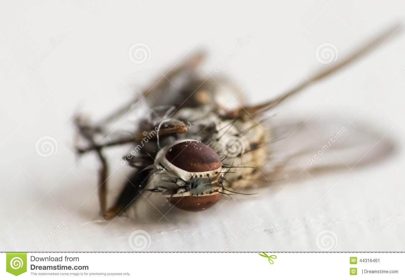 Common fly after meeting Spider