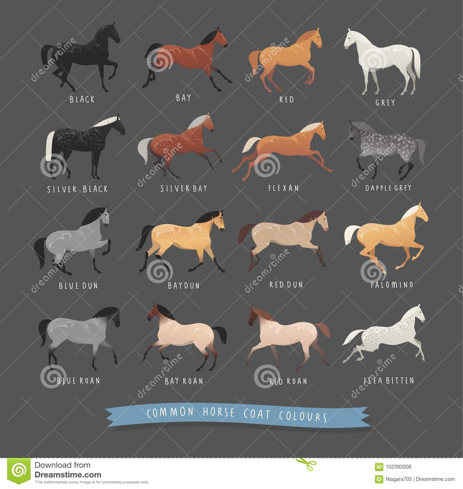 Roan Horse Stock Illustrations 45 Roan Horse Stock Illustrations Vectors Clipart Dreamstime