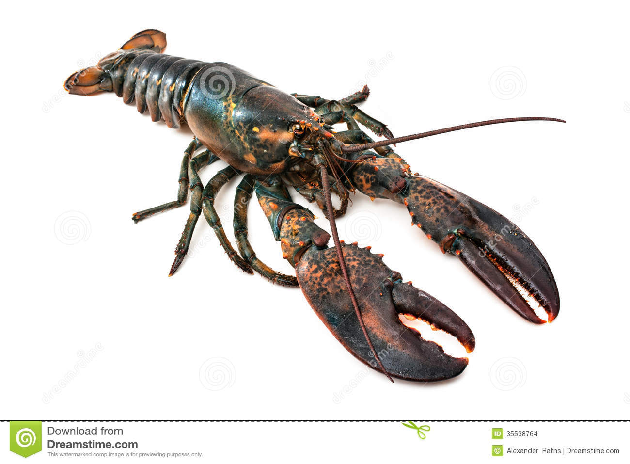 lobster stock photos images u0026 pictures 22 673 images