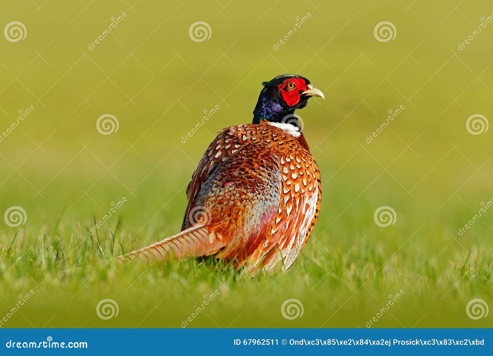 Bird germany royalty free stock photography Habitat deutschland
