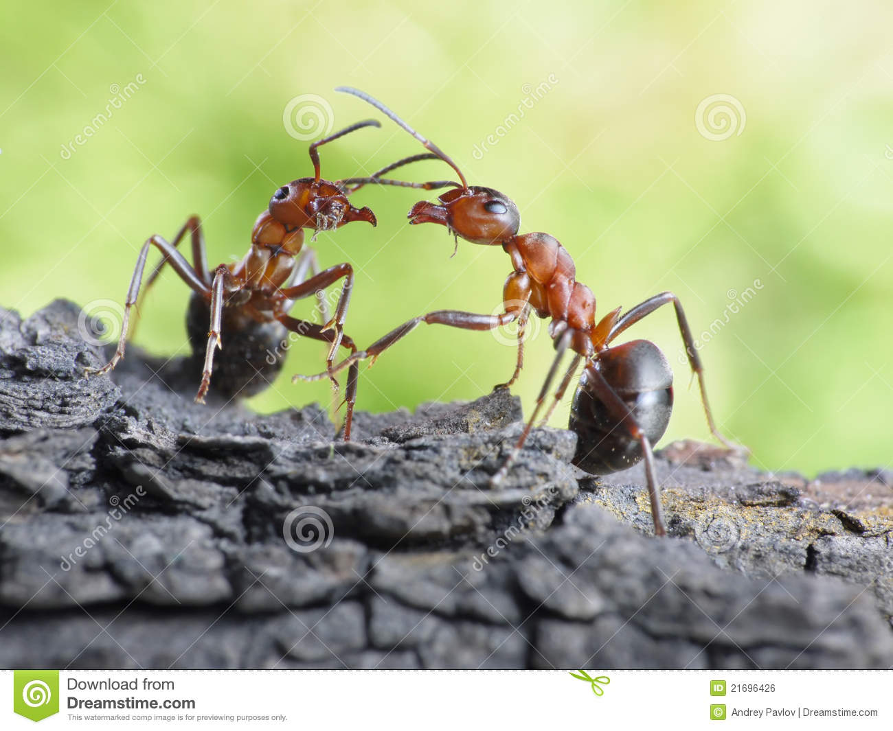 Communication of ants, dialog, links