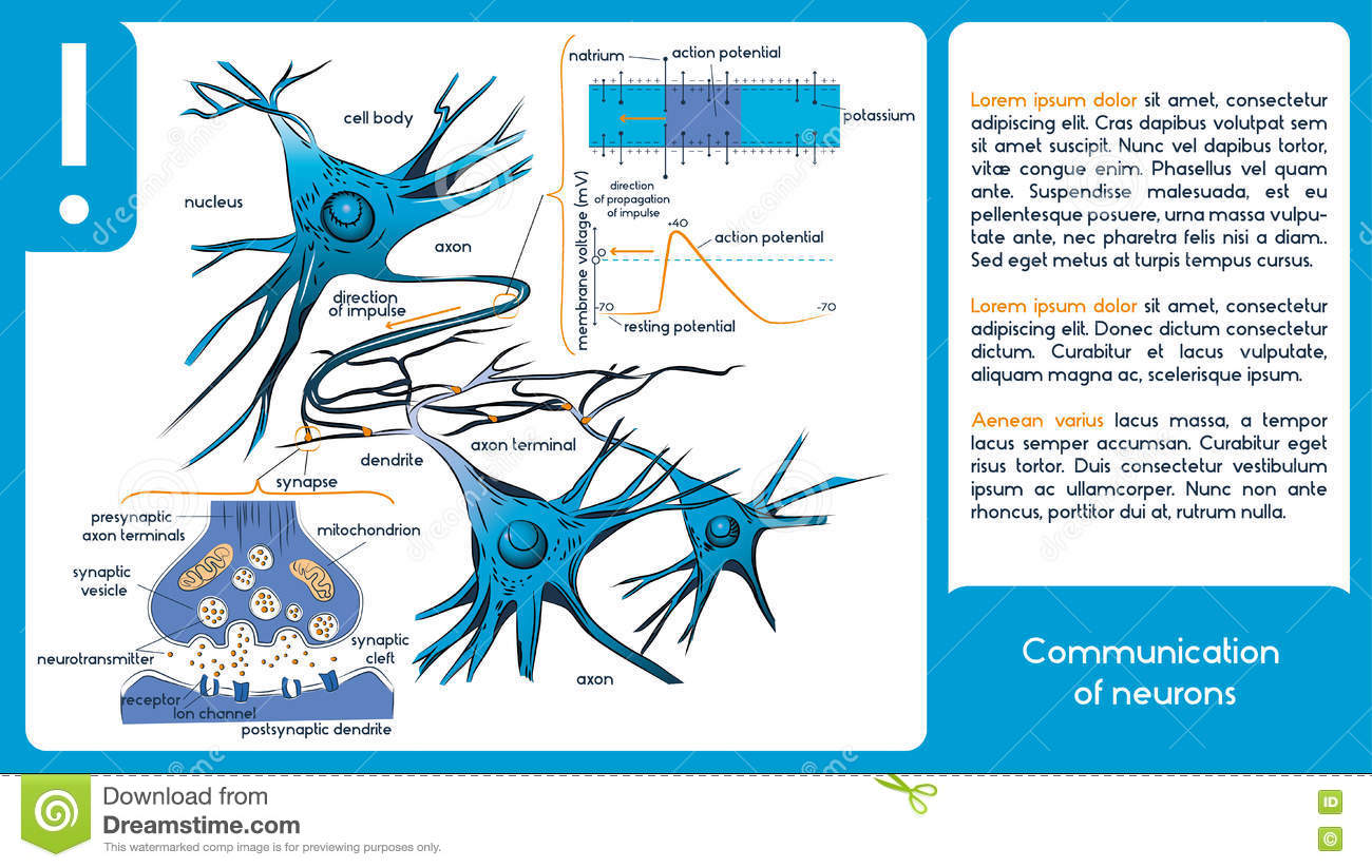 Communication of neurons stock vector illustration of nerve 76865943 download communication of neurons stock vector illustration of nerve 76865943 ccuart